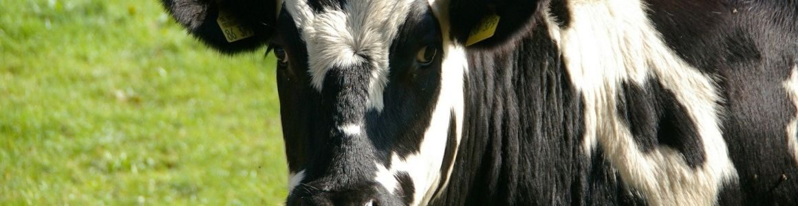 The Dairy EXPO is back with new classes.