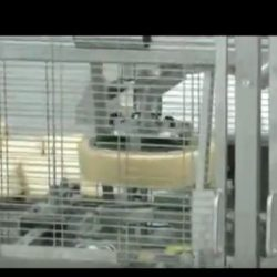 Automatic Wedges Cutter with Horizontal Cutting